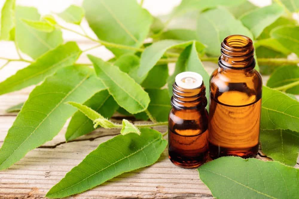Una botella de aceite de eucalipto de limón y hojas