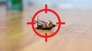 Las Mejores Maneras de Controlar las Cucarachas sin un Exterminador 2018