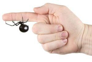 araña viuda negra muerde a mano