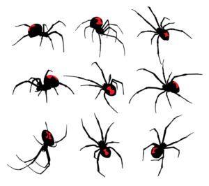 araña viuda negra sobre fondo blanco