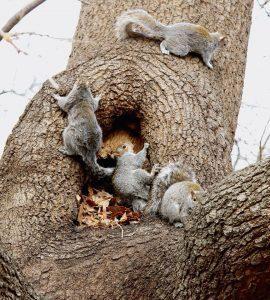 Varias ardillas en el árbol.