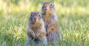dos ardillas lindas en la hierba.