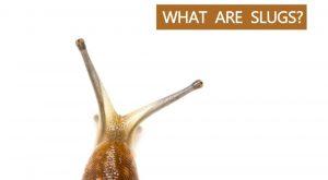 Qué Son las Zorras-Cosas Que Saber Sobre Ellas