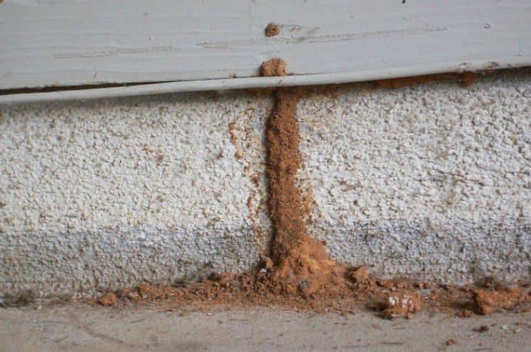 Túneles de termitas subterranea