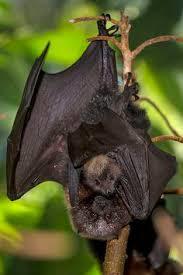 bebé murciélagos en la naturaleza