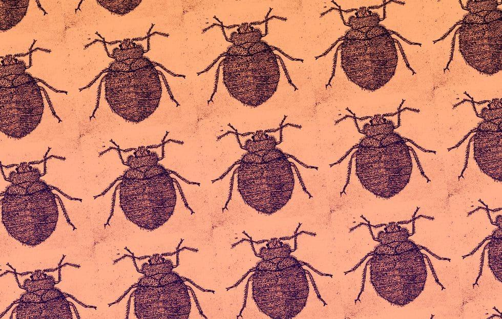 Un montón de insectos de la cama de dibujos animados
