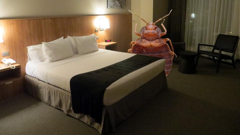 Consejos de Viaje: Qué Hacer si su Hotel tiene Chinches (2018)