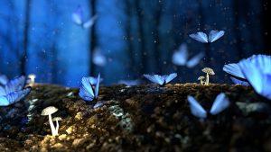 Todo sobre los Colores de Flores que las Mariposas Polinizan