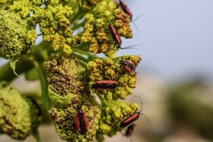 canva escarabajo insecto flor naturaleza fauna primavera