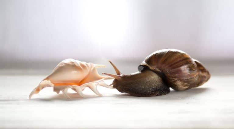 un caracol y un caparazón en el suelo