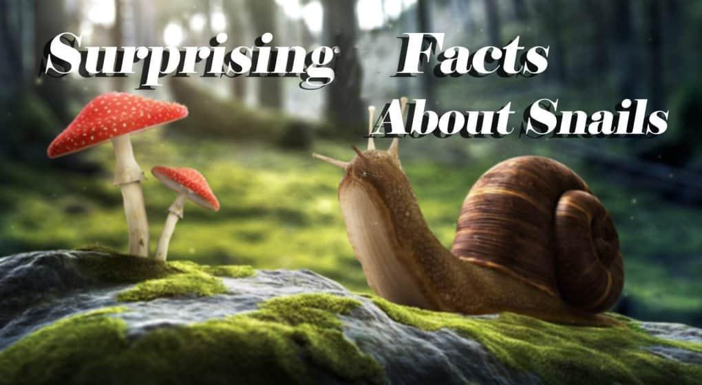 Caracoles – 10 Datos Sorprendentes del Caracol (2018)