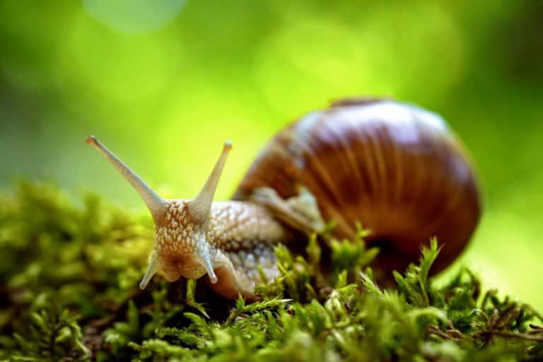 solo caracol en la naturaleza