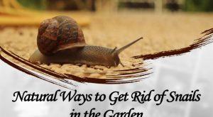 Formas Naturales de Controlar los Caracoles en el Jardino(2018)