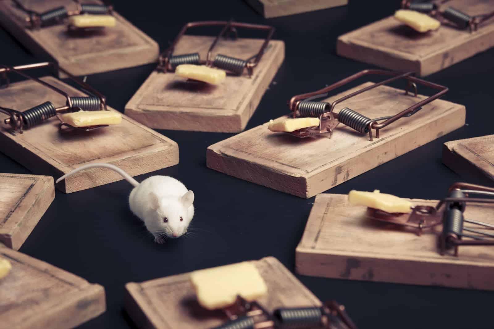 6 Mejores Cebos para Ratones para Capturar Ratones (Rápido y Efectivo)