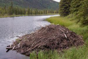 castor lodge junto al lago.