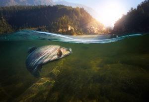 close-up cerrado de un anzuelo bajo el agua.