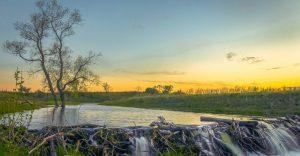 ¿Por Qué los Castores Construyen Represas? Ventajas y Desventajas de Estas Represas