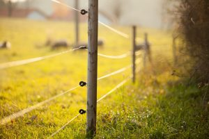Cercas eléctricas alrededor de hermosos pastos.