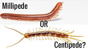 Ciempiés Frente a Milipedos: 9 Similitudes, 7 Diferencias y 8 Hechos Sorprendentes