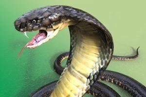 La serpiente venenosa más larga del mundo sobre fondo verde
