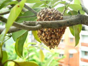 colmena de abejas en ramas