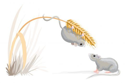 Ratones de dibujos animados en un tallo de maíz