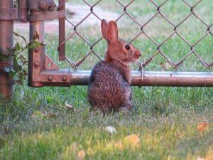 un conejo cerca de la valla