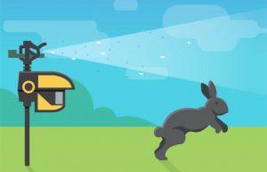un conejo saltando