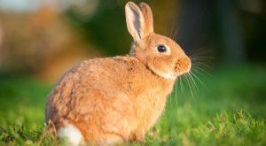 solo conejo en la naturaleza.