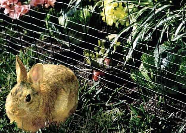 Repelentes de Conejos: 5 Opciones Naturales y Remedios Caseros