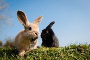 dos conejos en la naturaleza