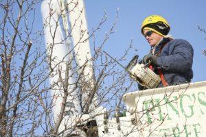 El trabajador está recortando ramas cerca del techo.