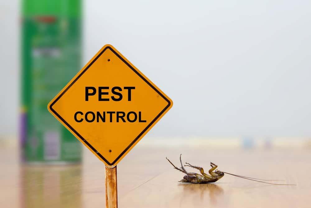 Una gran y amarilla señal de precaución con una cucaracha muerta
