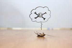 6 Cosas que Debes Saber: Controlar las Cucarachas Naturalmente (2018)