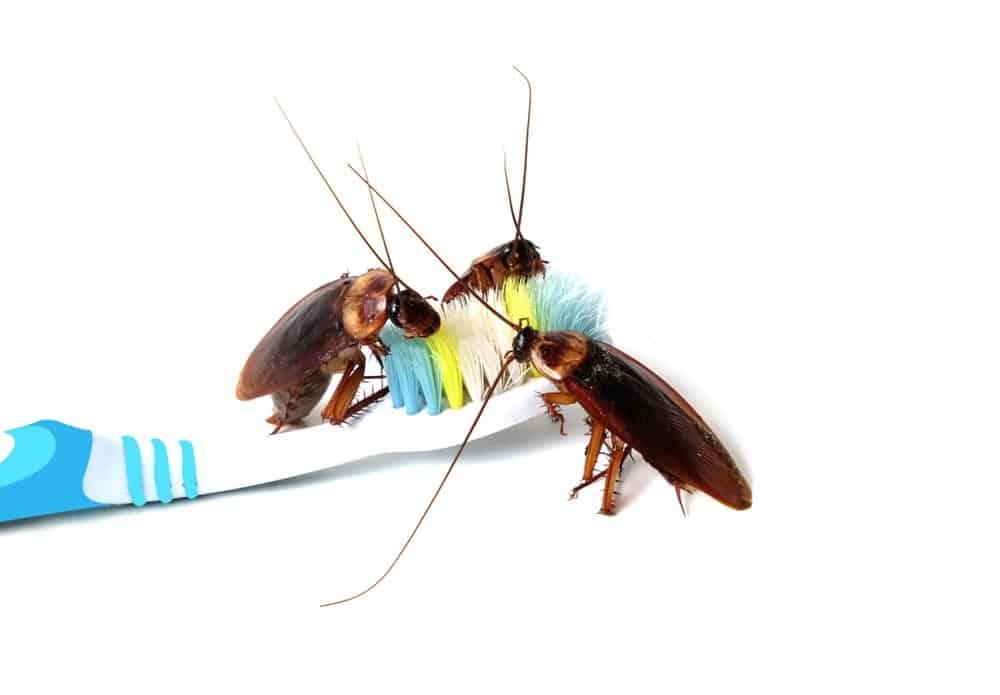 Tres cucarachas en el cepillo de dientes