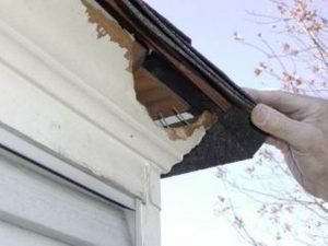 La casa dañada por la ardilla.