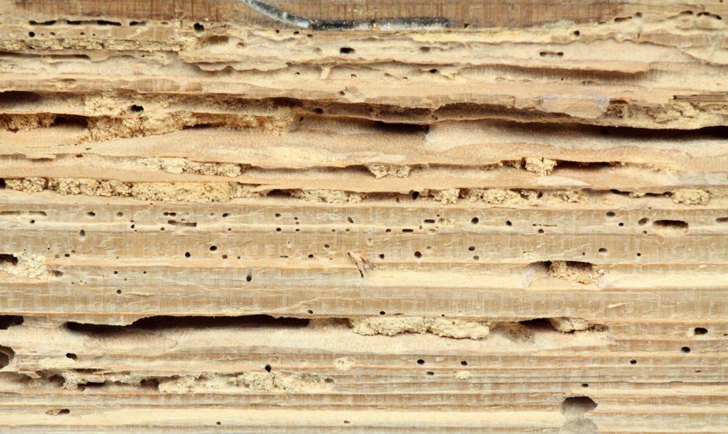 Daños de termitas a la madera