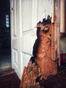 Daño de termitas de enjambre en la puerta