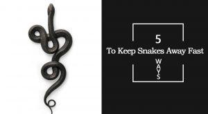 Cómo deshacerse de las serpientes