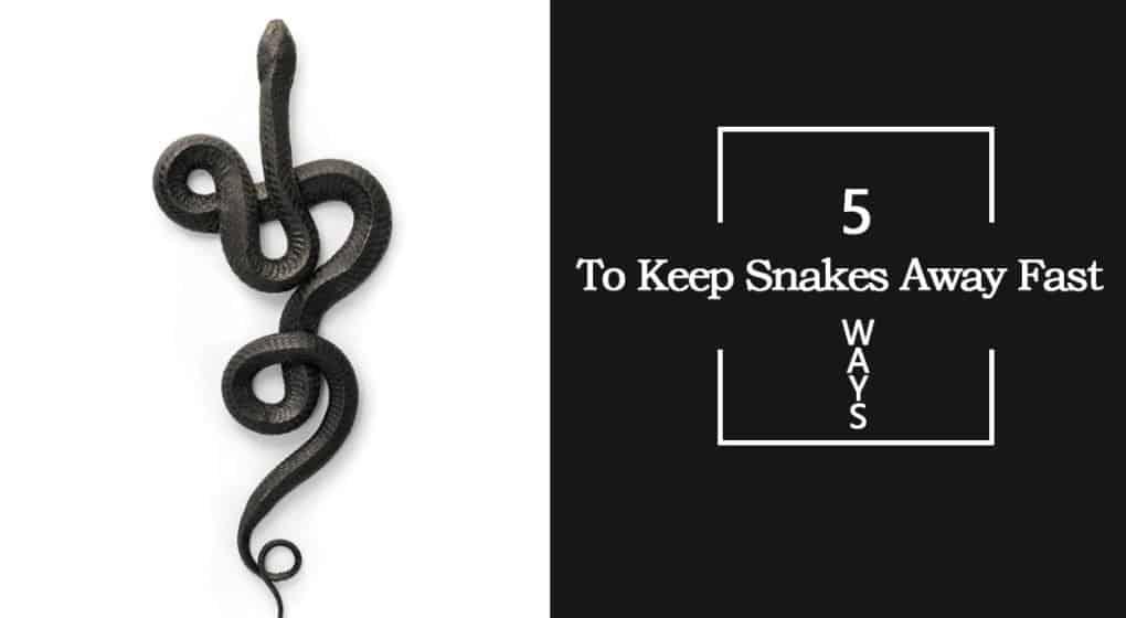 Cómo Mantener a las Serpientes Lejos Rápido: 5 Métodos que Estás Superando