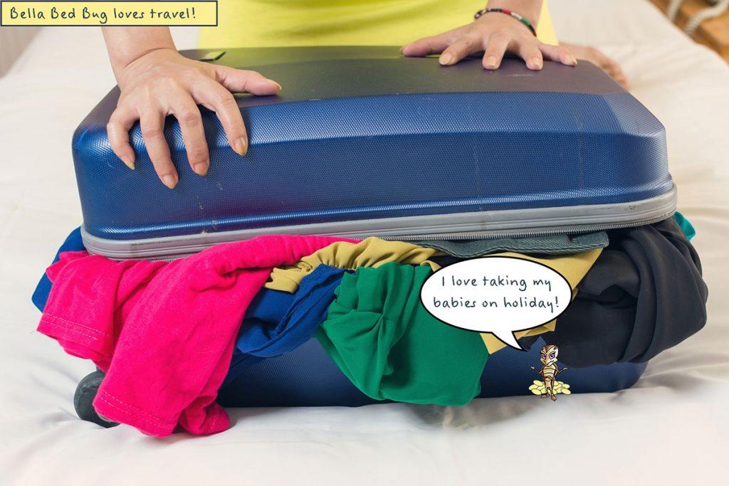 Insecto de la cama escondido en su equipaje