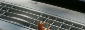 Una cucaracha está en el coche