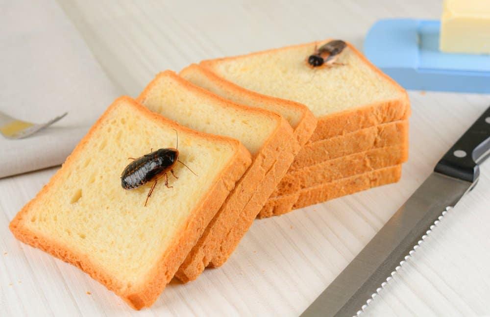Dos cucarachas en el pan