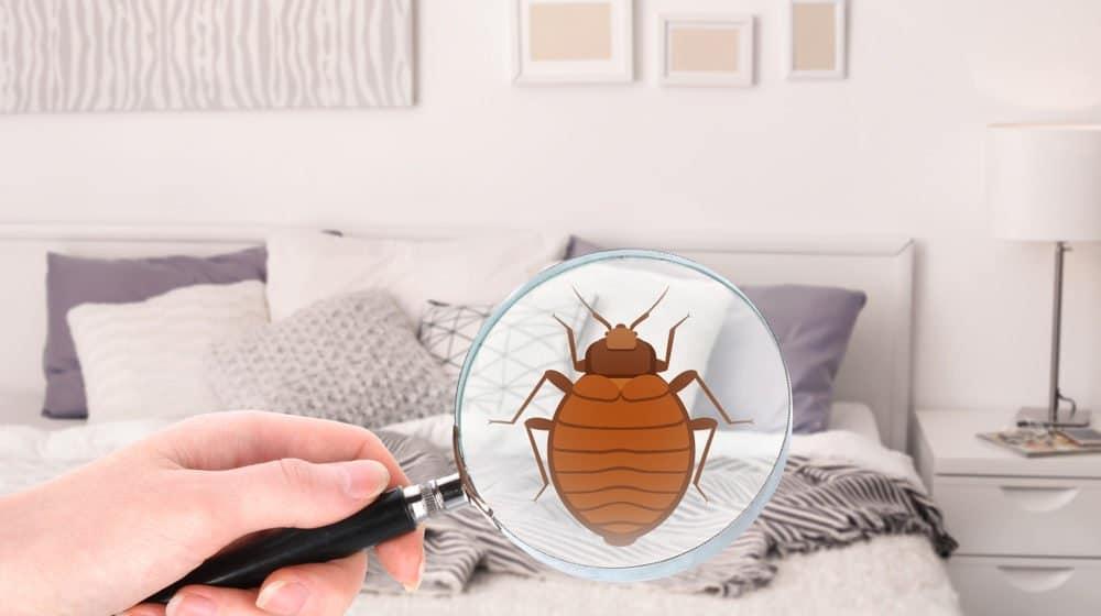 Utilizando lupa para encontrar los bichos de la cama
