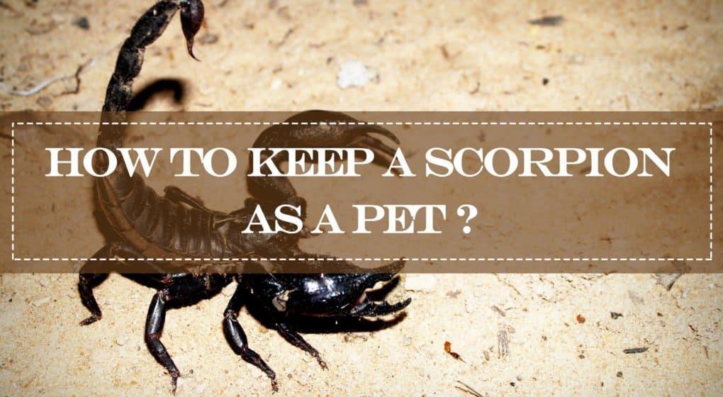 solo escorpión en el suelo