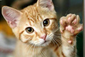 Un lindo gato está agitando su mano