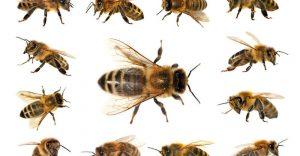 Un grupo de abejas en el blanco.