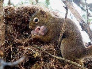 La ardilla gris sostiene a su bebé en brazos.