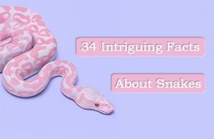 34 Datos Intrigables sobre las Serpientes: Usted Siempre Quiso Saber