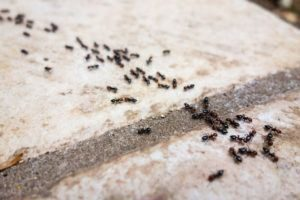 Grupo de caseras de hormigas